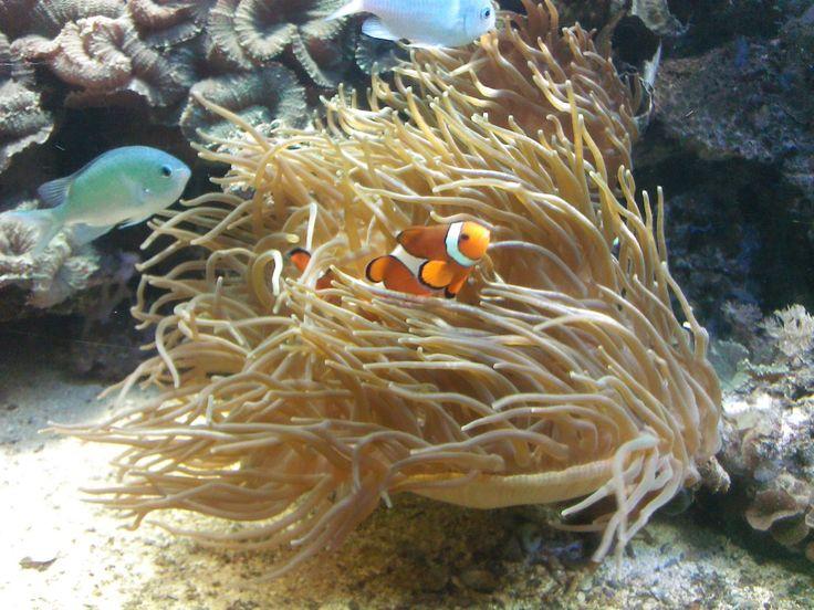 Aquarium Büsumer Meereswelten - Themenbereiche