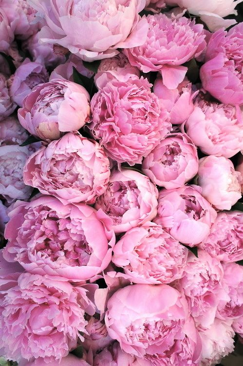 Pink peonies are so romantic, old fashion charm. I have tried to grow these in the last 3 years.... Living in hope.