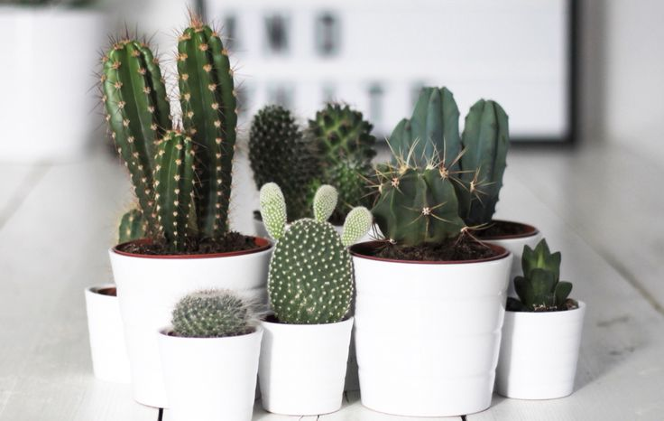 We threw together this nifty guide of what to buy and how to care for the cutest indoor plants, plus where to actually find them on the Gold Coast.