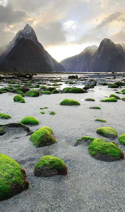 Mossy rocks and Mitre Peak. Milford Sound New Zealand