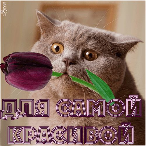 картинки с днём рождения кошки