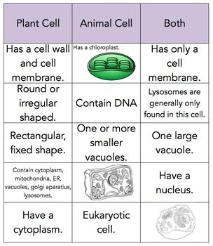 plant and animal cell sort 5th grade science pinterest plant