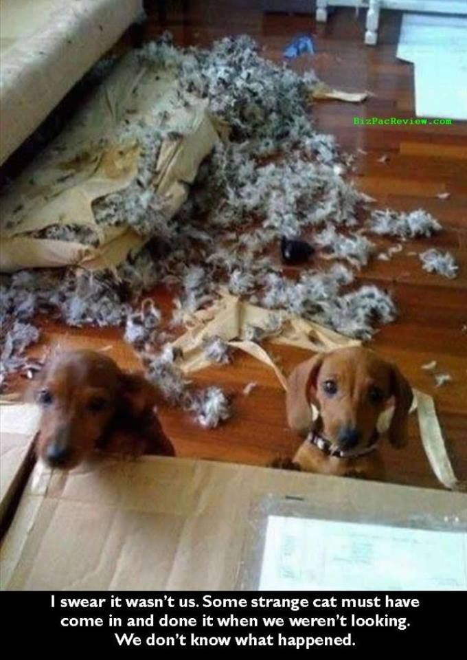 """Amen, sister. We have two that are always telling us the same thing!!! """"That is exactly how our doxie is!!"""""""