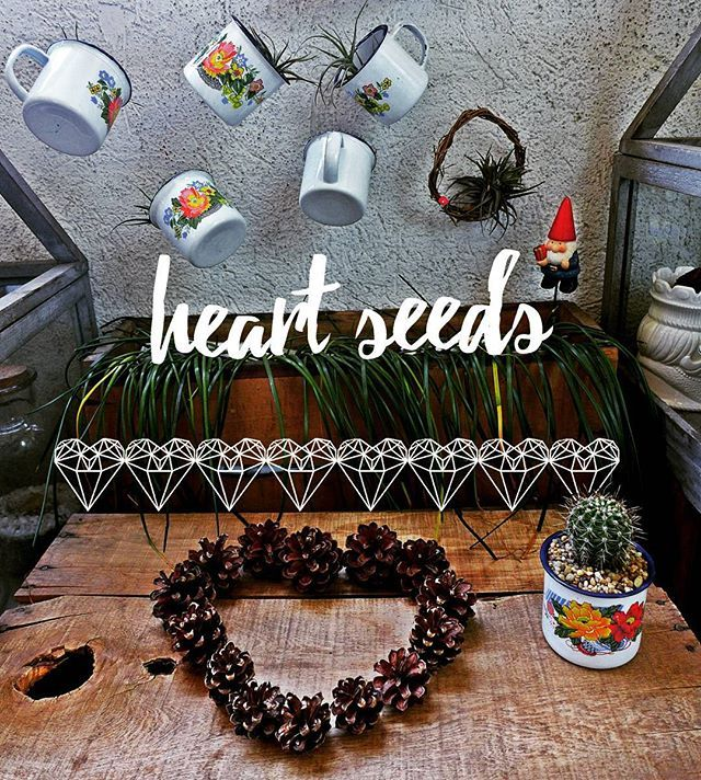 #heartseeds #cactus #pinus #metalmug #puropaisaje  #tillandsias #valentines #valentineday