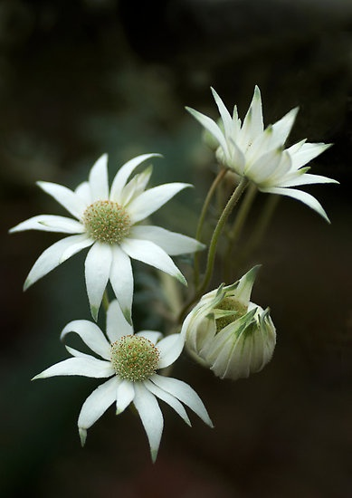 I love white flowers, these look particularly interesting and artsy.