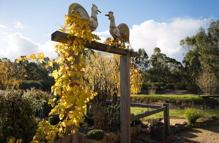 https://flic.kr/p/o4n32G | Goodwill Chooks | Gateway to the Vegetable Garden; 2 tin chooks from India bless all those who pull a weed or tend the Veggies.  Sunlight illuminates the last of the Autumn leaves on Sultana grapevine.