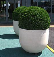 Box in Urbis Radius planters