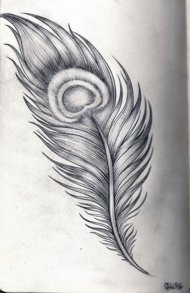 peacock feather drawing 1000 ideas about peacock feather