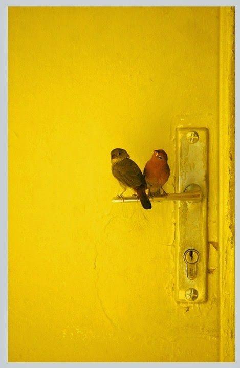 Sweet Birds perched on a door handle.