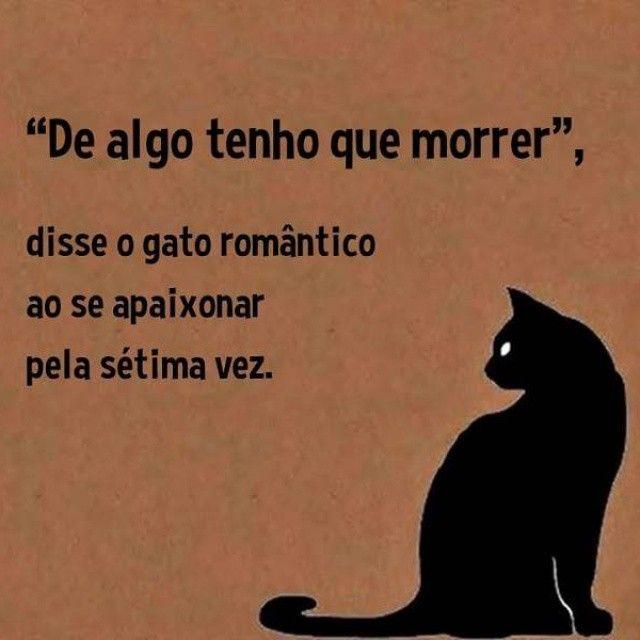"""""""De algo tenho que morrer."""" disse o gato romântico ao se apaixonar pela sétima vez."""