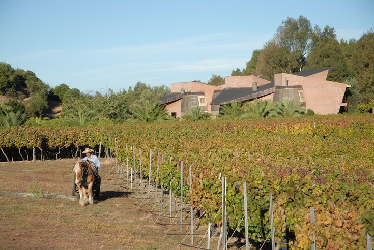 This is where it all starts - Gilmore Vineyards, Chile