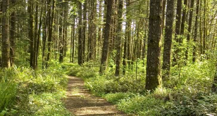 L l stub stewart state park vernonia oregon 20 miles of for Stub stewart cabins