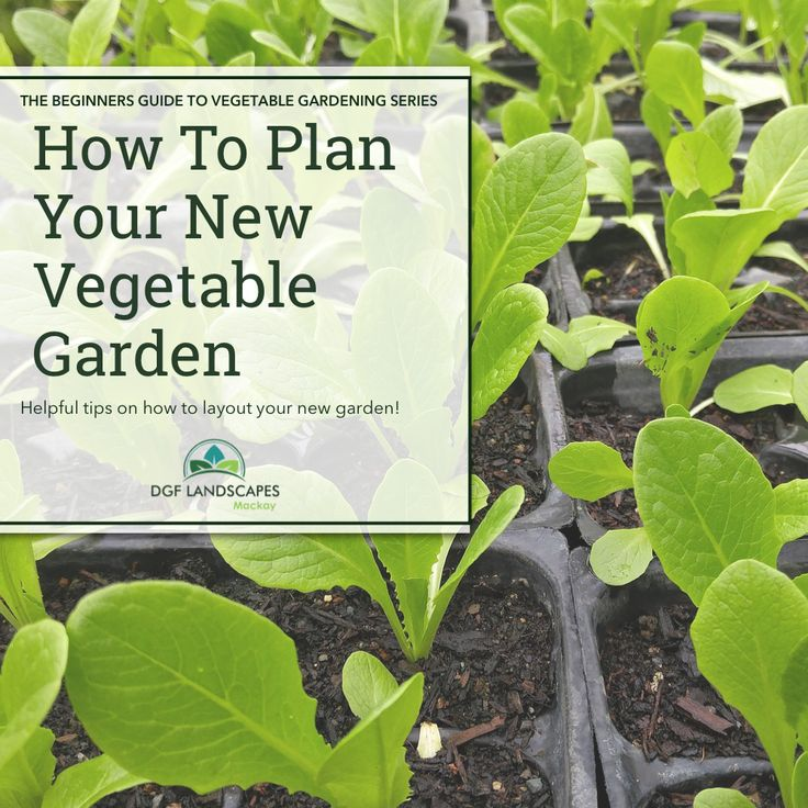 How To Plan Your New Vegetable Garden   Beginners Guide to Vegetable Gardening #vegetablegarden #vegetablegardening #homegrownvegetables