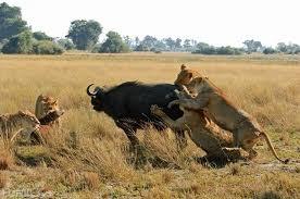 Chobe Marina Lodge For African Wildlife Safari