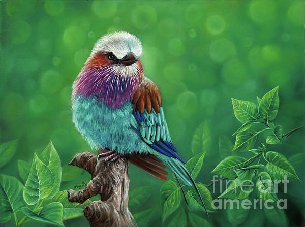 Lilac-breasted roller, bird, colorful, green, rainbow, leaf, plant, beautiful, animal, pastels, colored pencil, fluffy, angry bird, painting, blurry background