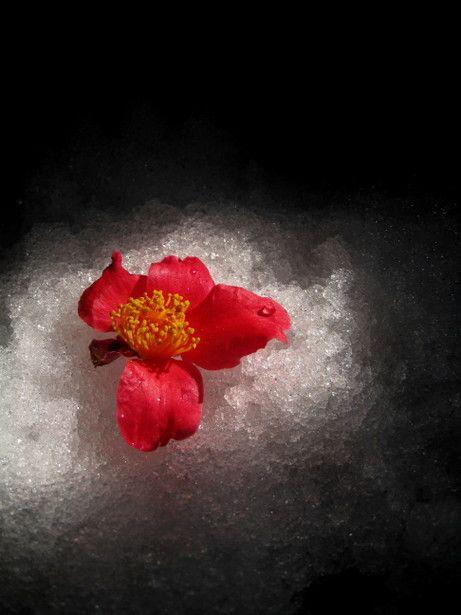 Image result for Japanese paintings haiku written on the heart