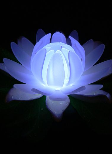 Multi Color Floating Glow Lily but DIY this for my yard. Buy a dollar store lilly and two of the little outdoor rock solar lights and put in the center of the flower....Oh so pretty