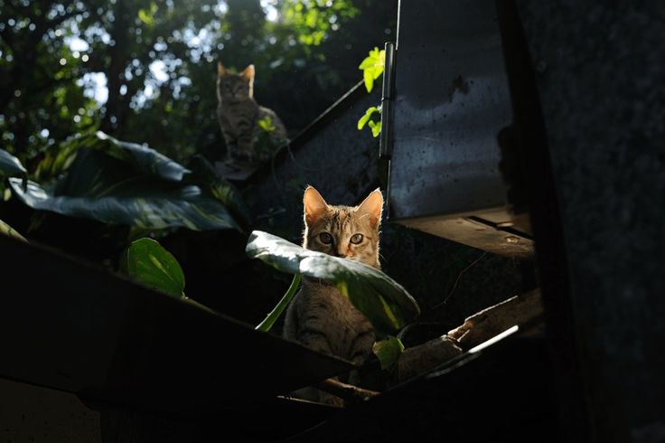 Photo competition launched to raise awareness of street cat plight find this amazing photo from Katzenworld