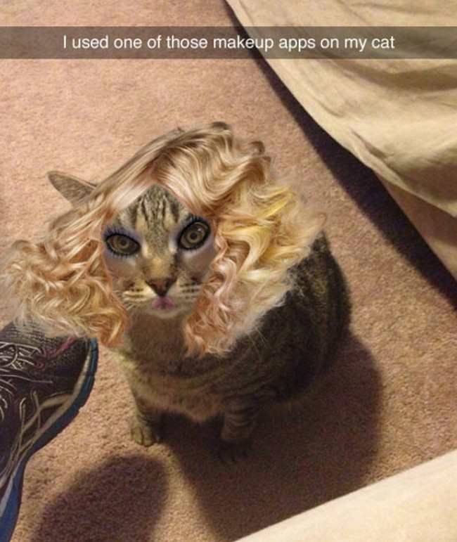 Funny Pic Dump (12.27.16) – Pleated-Jeans.com
