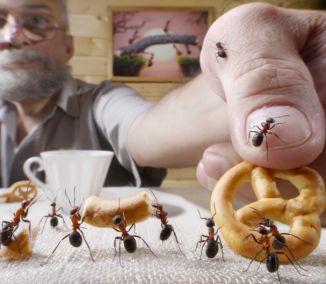 Sú nevítanými hosťami v našich domoch, bytoch i na terasách. Ak nechcete hneď siahnuť po chemických postrekoch proti mravcom, vyskúšajte niekoľko babských rád. Možno problém vyriešite rýchlo pomocou...
