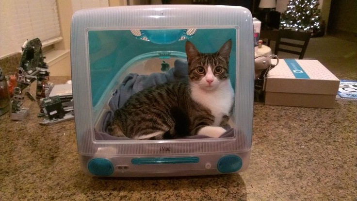 Up cycling is so much fun! This is a iMac G3 blueberry I gutted in order to make a sweet cat bed+conversation piece.