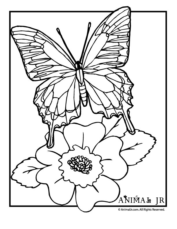 Butterfly Coloring Page With Flower Adult And Children S Coloring