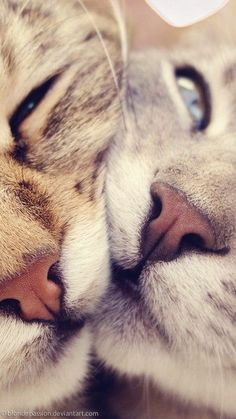 I dont know why... but I LOVE a cats nose! :)