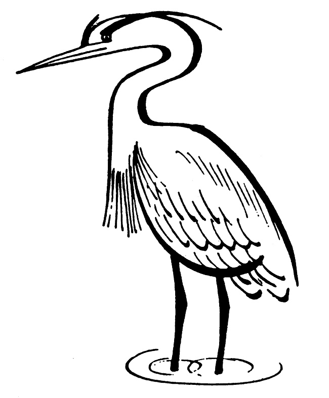 blue heron coloring pages - photo#17