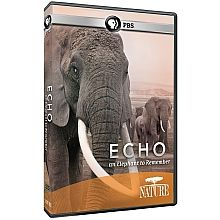 I loved this story, even though parts of it make me cry!  NATURE: Echo: An Elephant to Remember DVD - ShopPBS.org