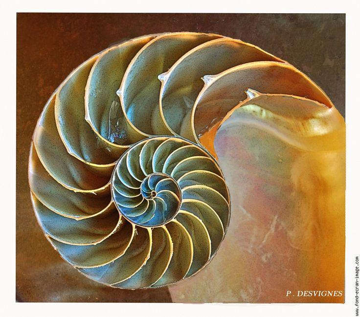 5706 best images about group spirals on pinterest for Nautilus garden designs