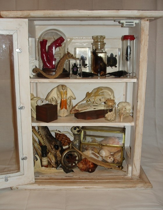 191 best Cabinets of curiosities images on Pinterest | Cabinet of ...