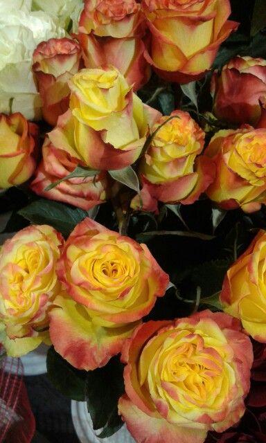 Розы Хай Оранж