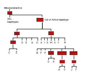 How Mitochondrial Eve connected all humanity and rewrote human evolution