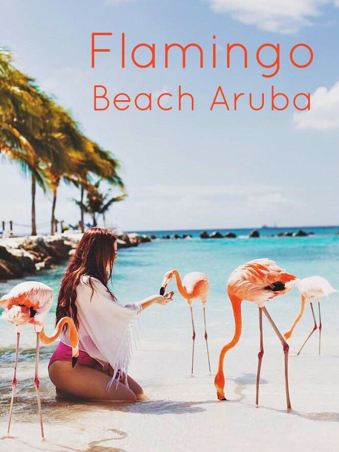 Up close and persoan with gorgeous flamingos on Aruba's Flamingo Beach. Featured on Beach Bliss Living: http://beachblissliving.com/wildlife-beaches/