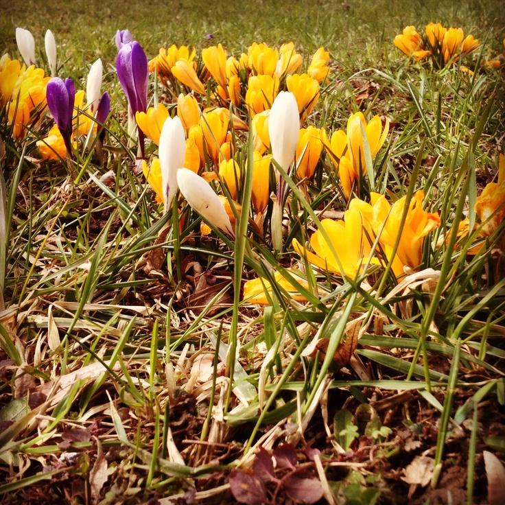 Spring, finally?