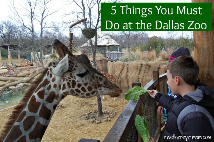 5 Things you Must Do at the Dallas Zoo ~ Dallas, TX - R We There Yet Mom?