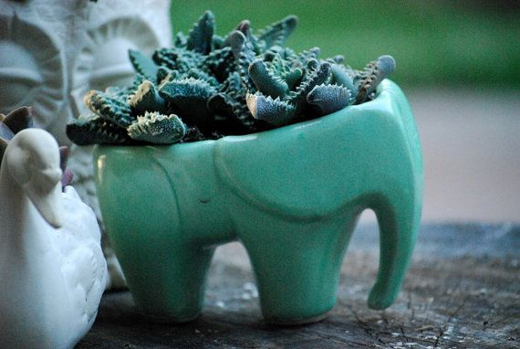 Elephant planter in mint green ceramic succulent planter, great additio to your indoor and outdoor garden MEASURING 6 tall and 7 wide. if