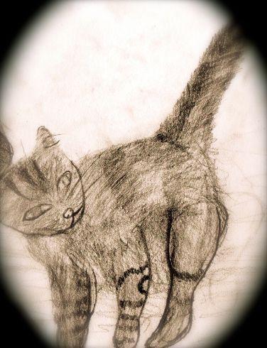 Random Cat #ByGabrielFargher