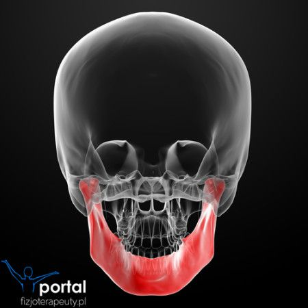 Szczęka #anatomia #nauka #wiedza #studia #fizjoterapia