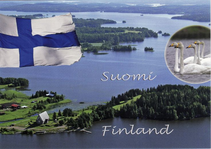 Laulujoutsen, Suomen kansallislintu - Whooper swan, the national bird of Finland