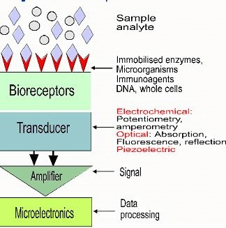 This study focuses on biosensors and is a sub report of IAS006E: Global Markets and Technologies for Sensors.