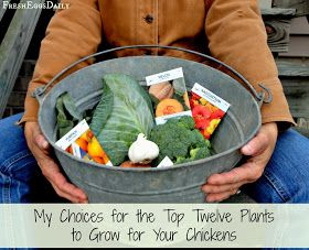 12 plants to grow for your chickens