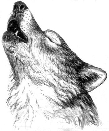 Best 10+ Wolf howling drawing ideas on Pinterest | Howling wolf ...