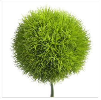 forget green mums! green dianthus (sweet william) for flower girl pomander instead.