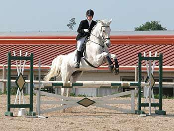 Pferd über dem Sprung