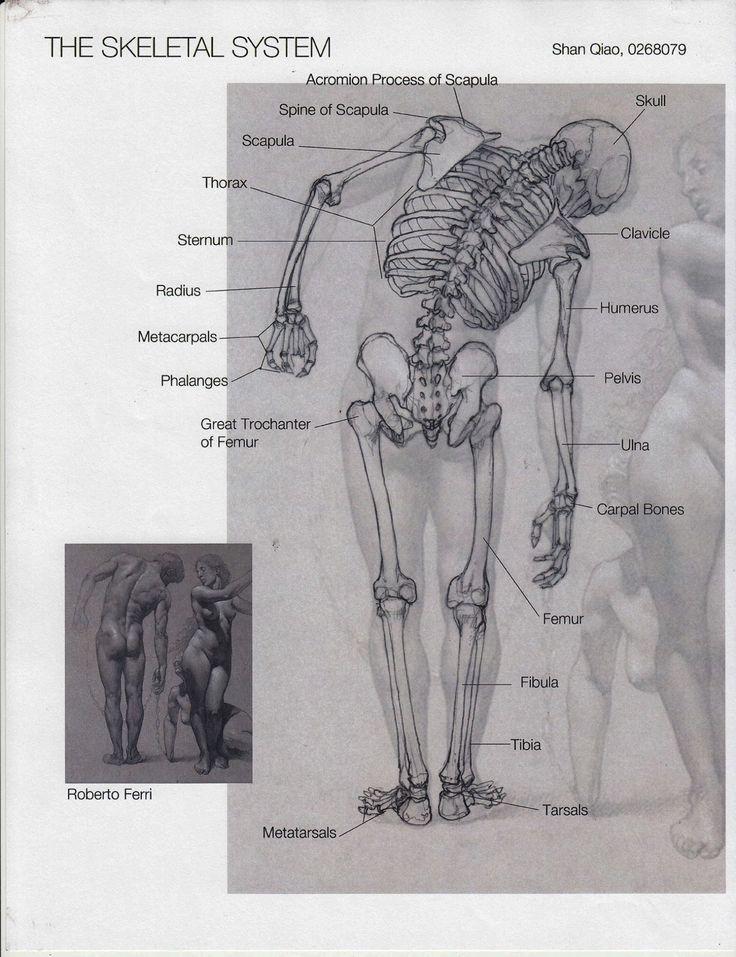 Charmant Science Olympiad Anatomie Bilder - Anatomie Von ...