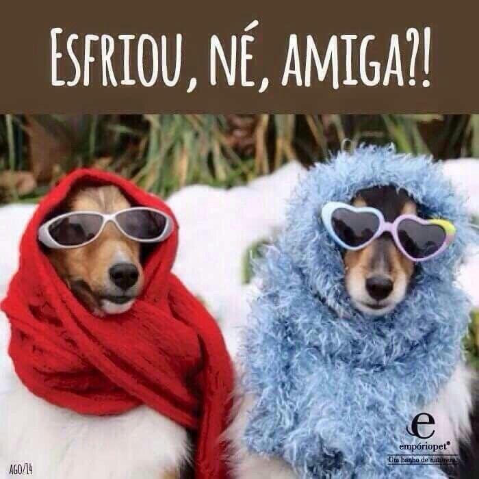 Humor Canino