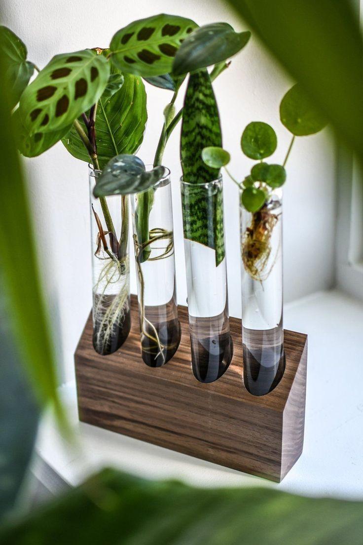 Piante Da Appartamento Originali.17 Unique Gifts For The Plant Lover In Your Life Con Immagini