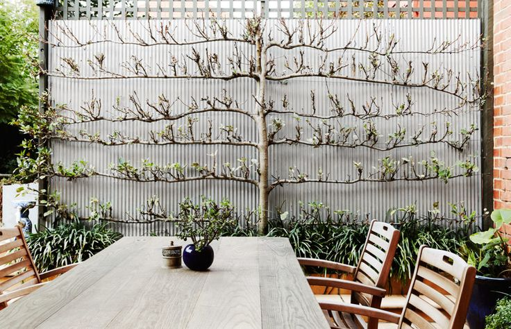 Garden. Table built by Matt Staples and the chairs were a bargain find at Swan Auctions. 'This espaliered apple tree that has never borne fruit was here when I arrived, I've continued to train it with the help of Darryn aka The Little Garden Guy,' says Stephanie.  Photo – Annette O'Brien. Production – Lucy Feagins / The Design Files. ~ With optimal health often comes clarity of thought. Click now to visit my blog for your free fitness