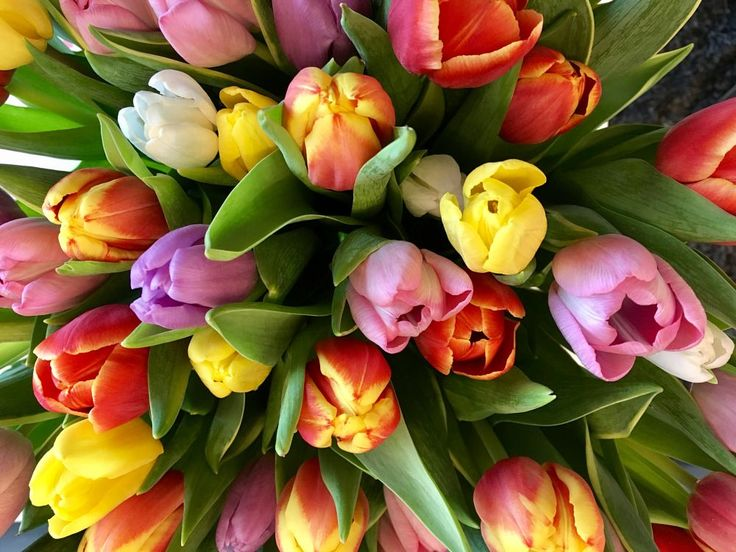 Tulips by Ritva Sillanmäki  Photography